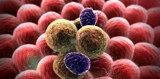 bỏ đối tế bào ung thư
