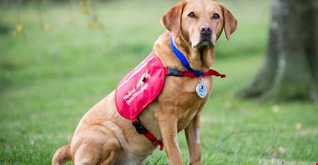 Chú chó Daisy phát hiện ung thư