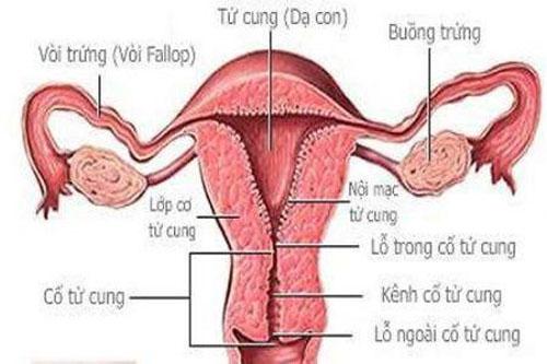 Chữa trị ung thư buồng trứng ở giai đoạn đầu
