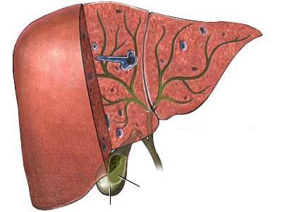 Chữa trị ung thư bằng Đông y dựa trên những yếu tố nào