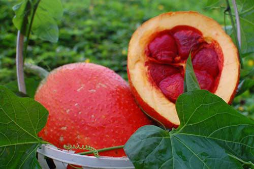 Thực phẩm phòng chống bệnh ung thư