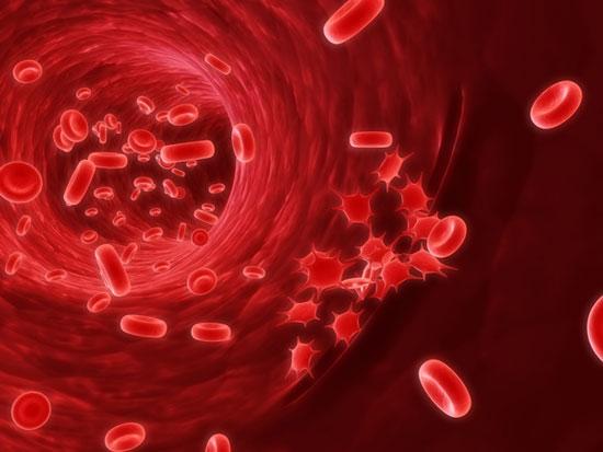 Ngăn chặn protein Hhex phương pháp mới điều trị ung thư máu