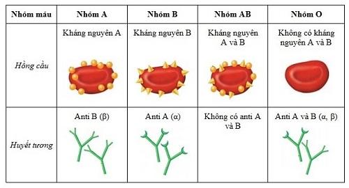 nhóm máu và bệnh ung thư