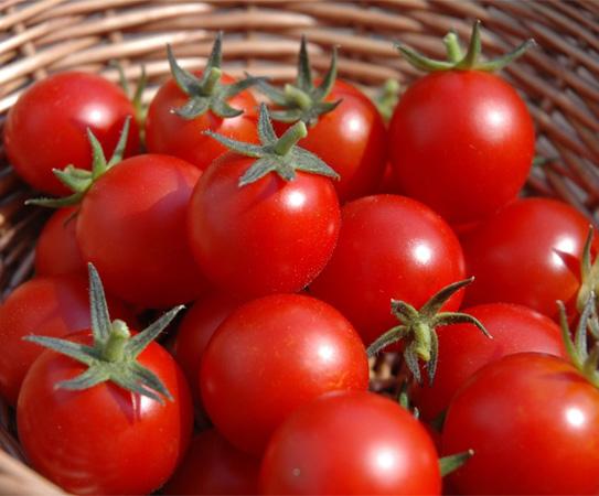 Cà chua giúp phòng ngừa ung thư