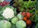 rau chứa chất gây ung thư