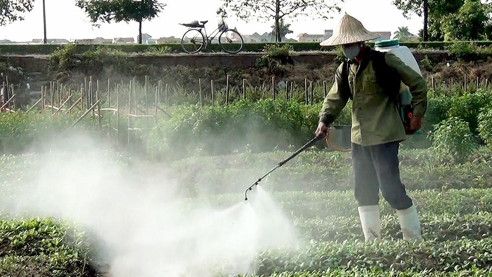 Thực phẩm gây ung thư do thuốc trừ sâu.