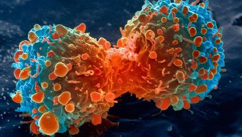 cơ hội tự chữa trị thành công ung thư