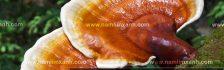Bảng giá bán nấm lim xanh tự nhiên địa chỉ bán nấm lim xan tại TPHCM