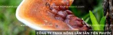 Cách làm sạch nấm lim xanh và nấu nấm lim xanh Quảng Nam uống hiệu quả
