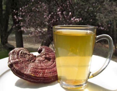 Cách sắc thuốc nấm lim xanh đơn giản nhất là đun làm nước uống