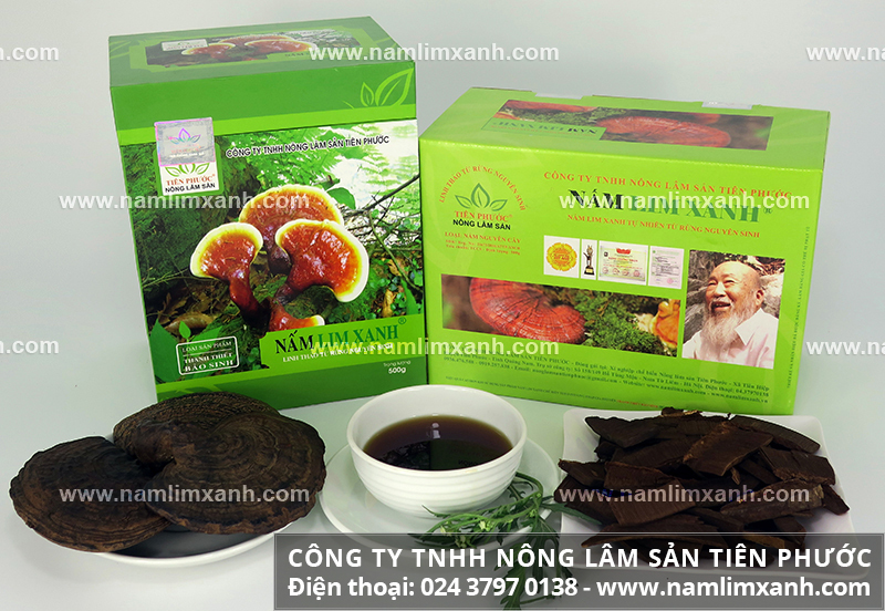 Công dụng của cây nấm lim xanh và tác dụng của nấm lim xanh tự nhiên