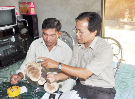 Công ty nấm lim xanh Nguyễn Đình Hoa có thực sự tốt?