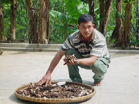 Ông Nguyễn Đình Hoa khai nhận khai thác nấm nhìn giống nấm lim xanh