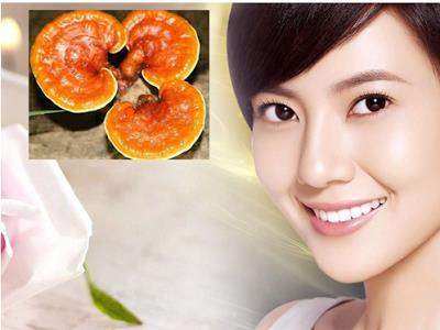 Sử dụng nấm lim xanh Lào nguyên chất đều đặn cho kết quả tốt