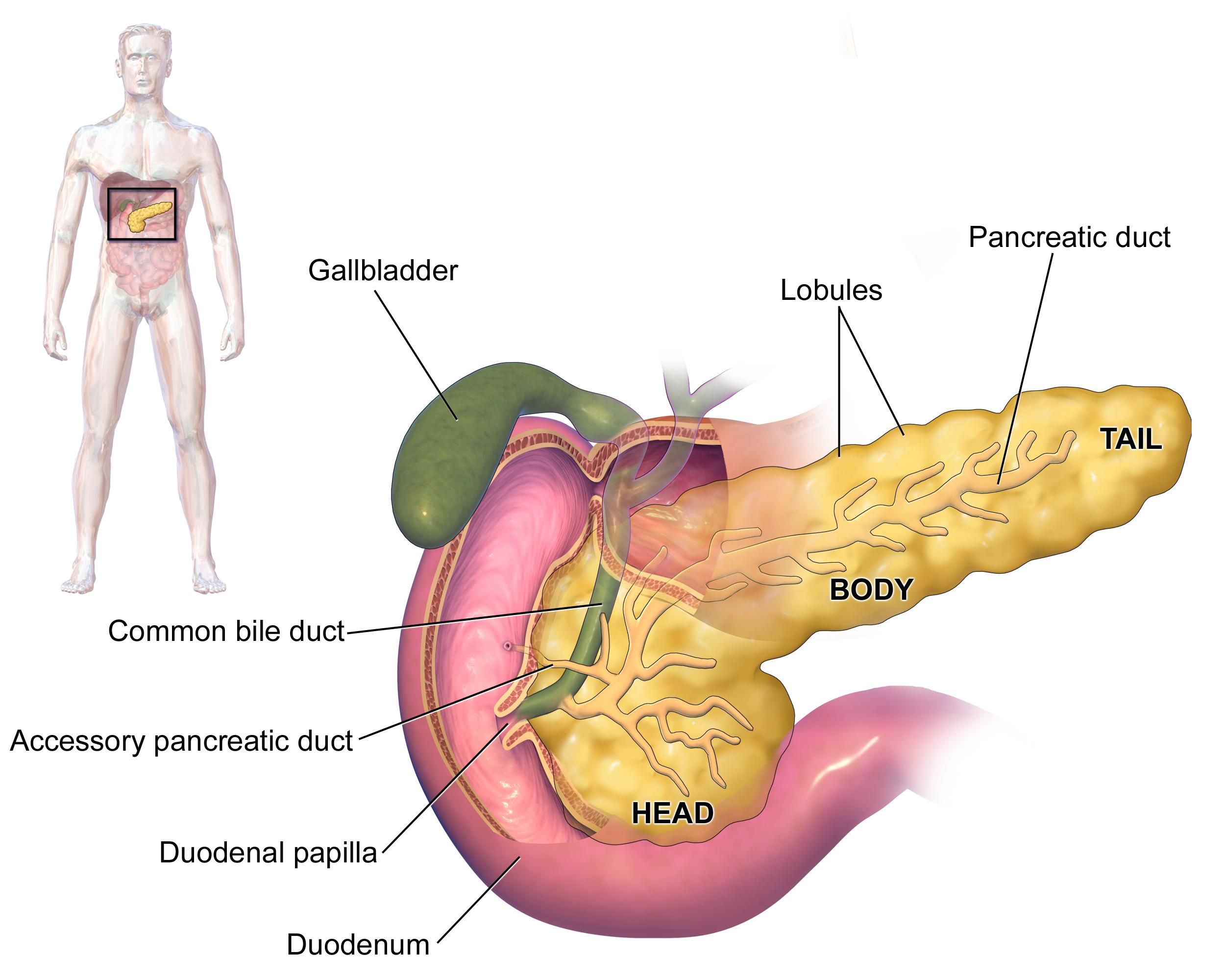 Ung thư tụy - những điều cần biết trước khi quá muộn
