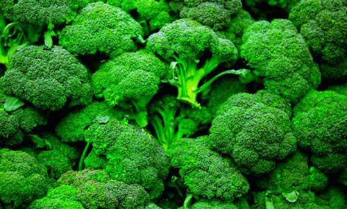 Bông cải xanh hỗ trợ điều trị bệnh tiểu đường rất tốt