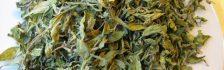 Xạ vàng có tác dụng chữa trị nhiều bệnh khác nhau hiệu quả