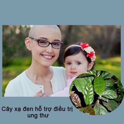 Cây xạ đen là loại thảo dược an toàn và có nhiều tác dụng trong việc điều trị ung thư