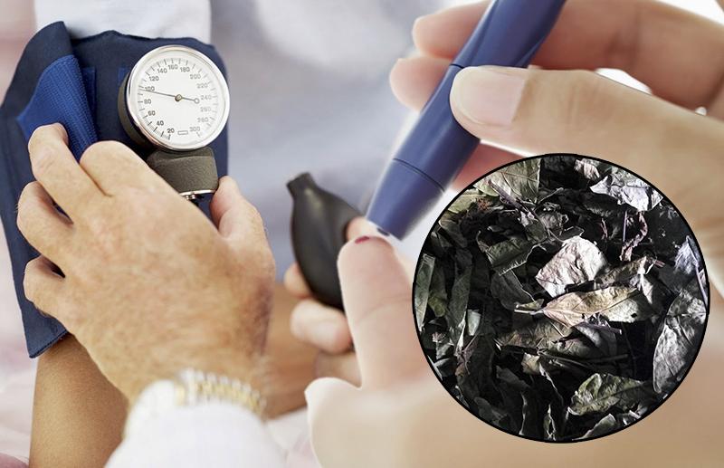 Điều trị tiểu đường là câu trả lời cho vấn đề cây thuốc xạ đen chữa bệnh gì.