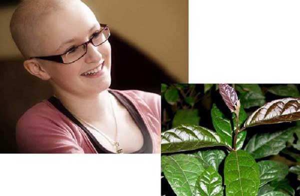 Cây xạ đen là một vị thuốc Nam có thể điều trị bệnh ung thư.