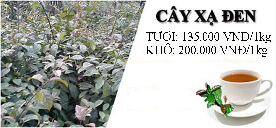 Cây xạ đen tại thành phố Hồ Chí Minh có giá dao động từ 80 nghìn đến 135 nghìn/1kg với loại tươi; từ 150 nghìn đến 200 nghìn với loại khô.