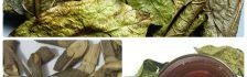 Hình ảnh lá, thân xạ đen chữa bệnh ung thư
