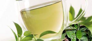 Nước trà cây xạ đen giúp điều trị nhiều bệnh lý.