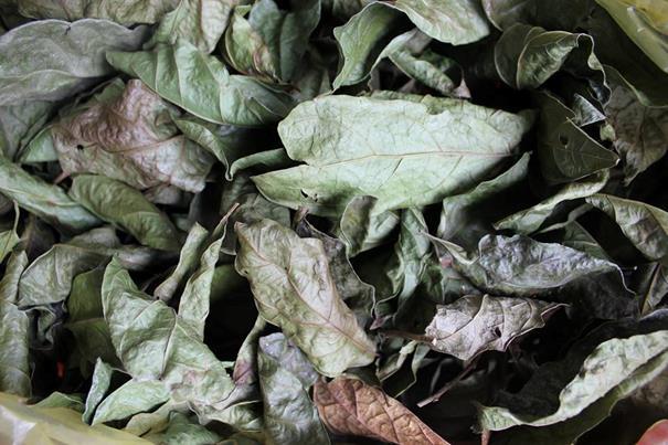 Xạ đen là vị thuốc có tính hàn nên nó được dùng để điều trị trị mụn nhọt và viêm nhiễm do lở ngứa.
