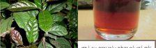 Hộp trà xạ đen Hòa Bình 40g với giá dao động từ 35.000 đồng đến 45.000 đồng