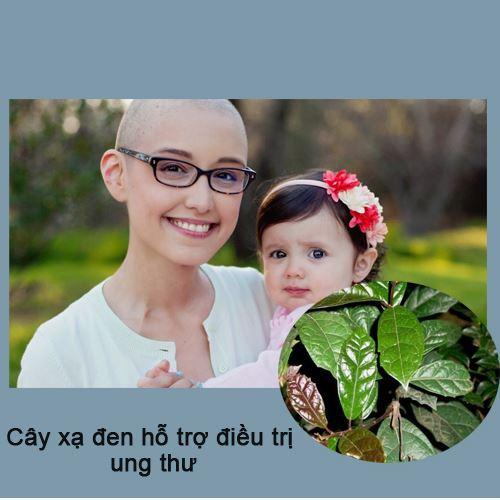 Nước lá xạ đen giúp hỗ trợ điều trị cho bệnh nhân ung thư.