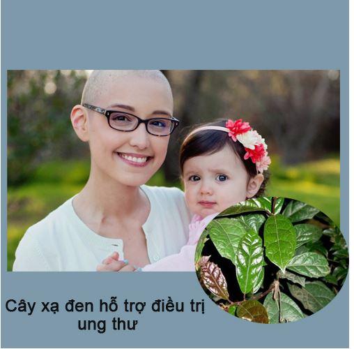 Cây xạ đen hỗ trợ điều trị cho bệnh nhân ung thư hiệu quả.