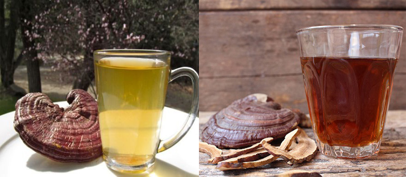 Cách sử dụng nấm lim xanh tốt nhất là sắc nước uống hoặc hãm trà.