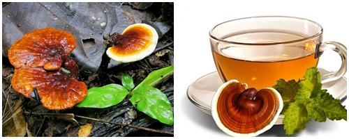 Uống nấm lim rừng kiêng gì?
