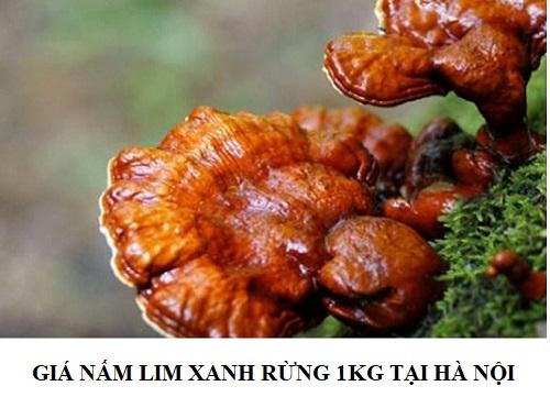 Giá nấm lim xanh rừng tự nhiên bao nhiêu tiền 1kg tại Hà Nội được nhiều người quan tâm