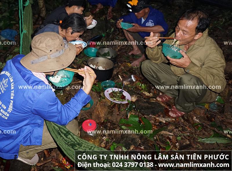 Cách tìm nấm lim xanh mọc ở đâu trong rừng tự nhiên.