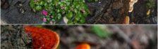 Cần mua nấm lim xanh Quảng Nam – Giá nấm lim trên thị trường