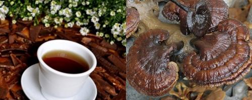 Công dụng của nấm lim xanh Quảng Nam có tác dụng tốt trong điều trị ung thư, gan, máu nhiễm mỡ...