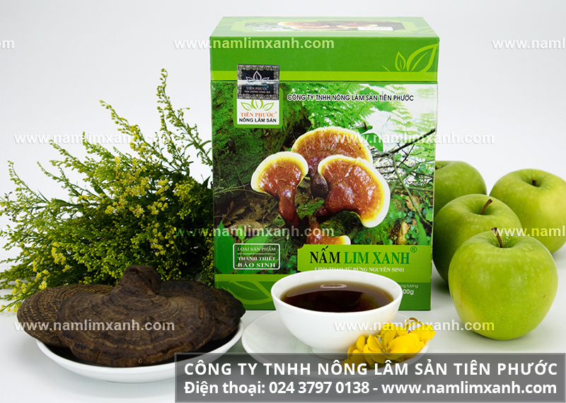 Công dụng nấm lim xanh Quảng Nam và tác dụng nấm lim rừng Quảng Nam