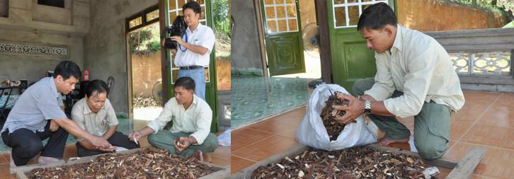 Công ty nấm lim xanh Nguyễn Đình Hoa cung cấp các sản phẩm nấm không rõ nguồn gốc.