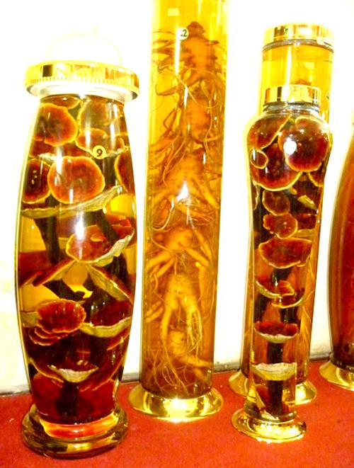 Nấm lim ngâm rượu có tốt không là thắc mắc của nhiều người dùng nấm lim