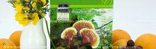 Nấm lim xanh Tiên Phước có tác dụng gì giá bán nấm lim xanh Tiên Phước