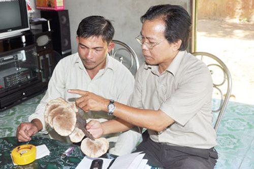 Cơ quan chức năng phát hiện cơ sở của Nguyễn Đình Hoa nấm lim xanh không đảm bảo chất lượng