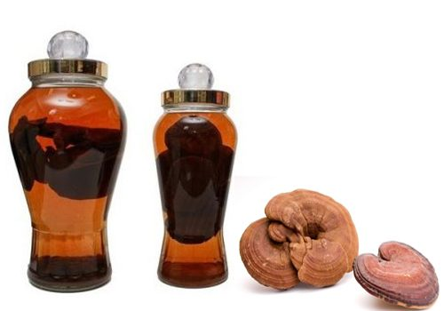 Tác dụng của nấm lim ngâm rượu rất tốt cho sinh lý nam giới