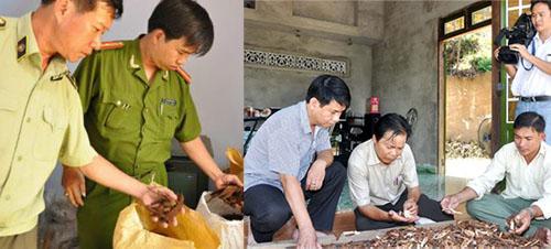 Nấm lim xanh Nguyễn Đình Hoa thực chất là nấm giả, nấm kém chất lượng đã được Chi cục Quản lý thị trường tỉnh Quảng Nam phát hiện.