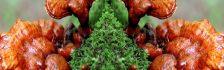 Không có nghiên cứu khoa học nào chỉ ra tác hại của nấm lim xanh rừng
