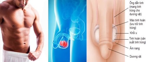 Những dấu hiệu của ung thư tinh hoàn